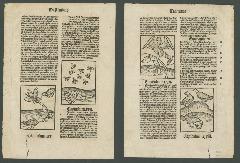 Go to Hortus sanitatis [folium 201] item page