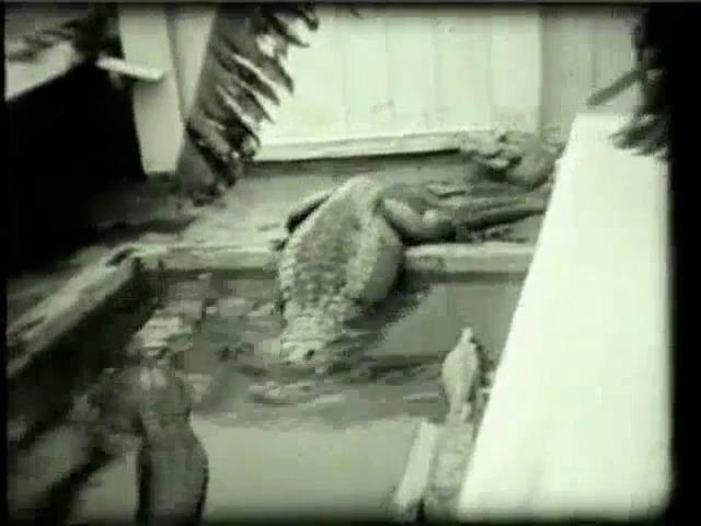 Go to Florida. Alligators, 1931 item page