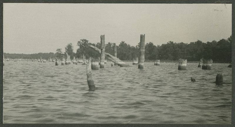 Go to Tennessee. Reelfoot Lake cypress stumps item page