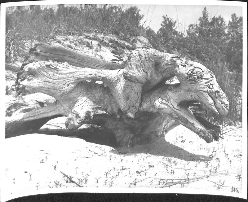 Go to Driftwood Shaped like a Dragon item page