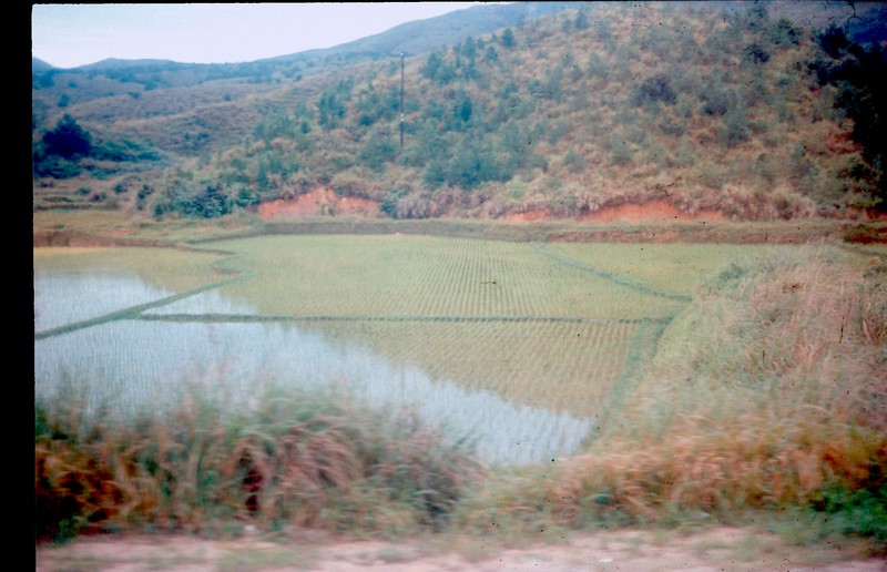 Go to Rice paddies around the Quang Tri area item page