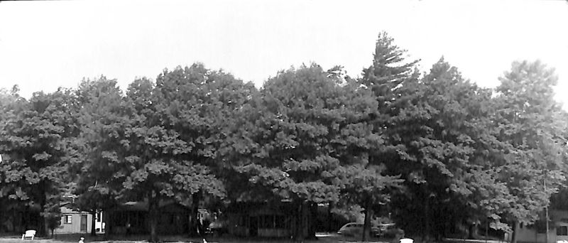 Go to Cabins obscured by trees item page