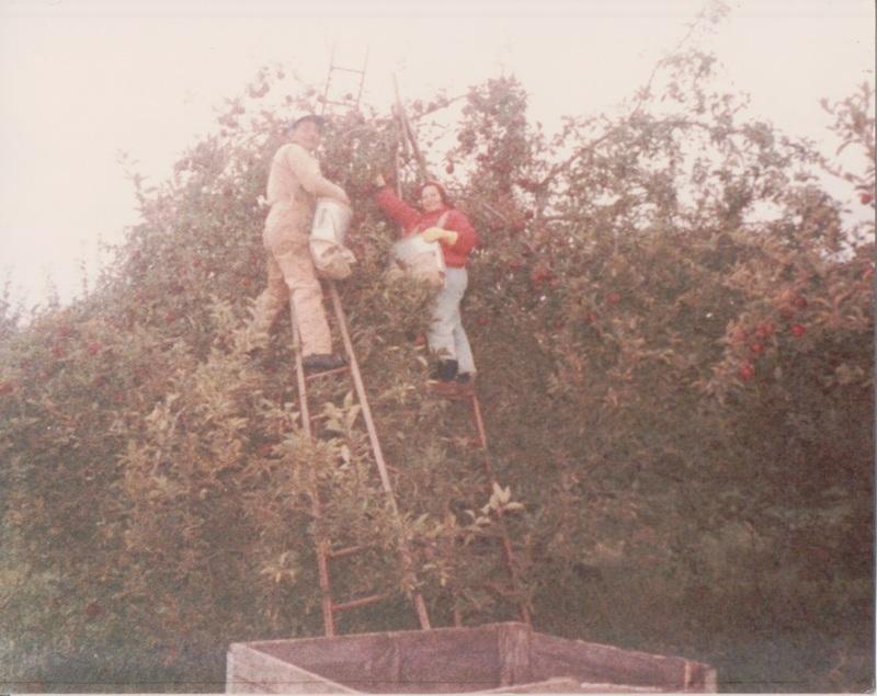 Go to Francisco and Zandra Vasquez, picking apples, November 1987 item page
