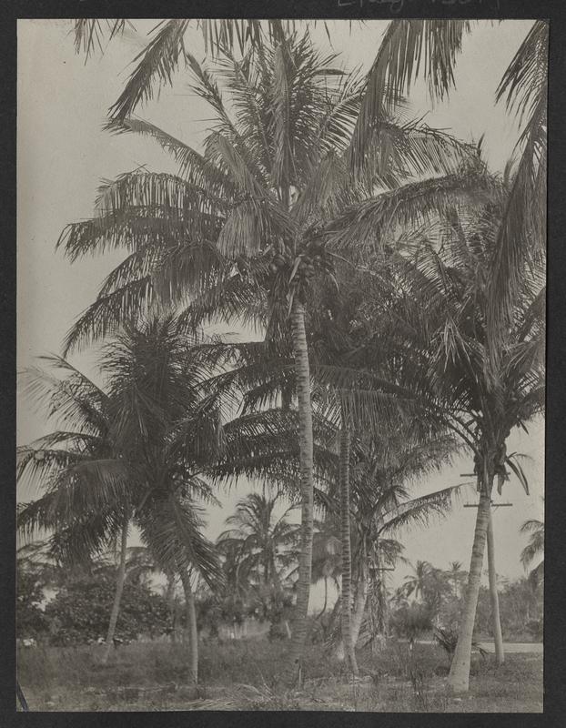 Go to Florida. Miami Beach, Florida item page