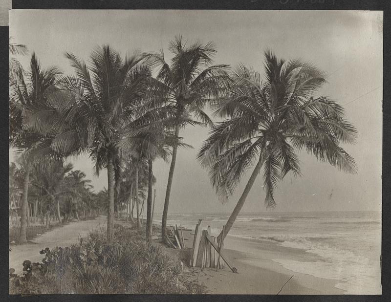 Go to Florida. Miami, Florida item page