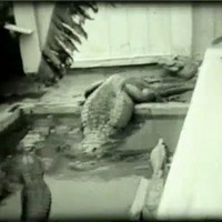 Florida. Alligators, 1931