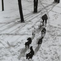 Go to A. Cecil Houghton races his dogsled during Winter Carnival item page