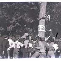 Go to Michigan. Young man in tree for class rush item page